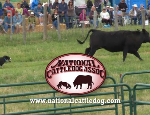 National Cattledog TV Commercial