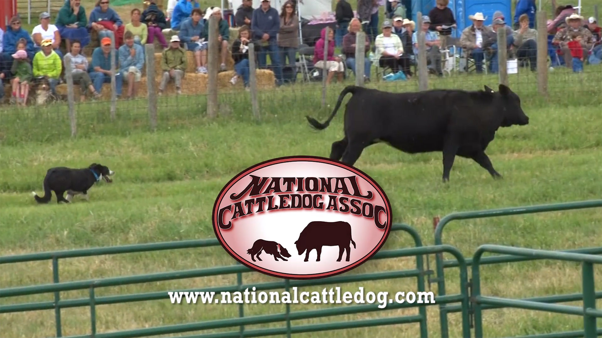 National Cattledog Association video. Omaha Video Production Company LP Photo Video.