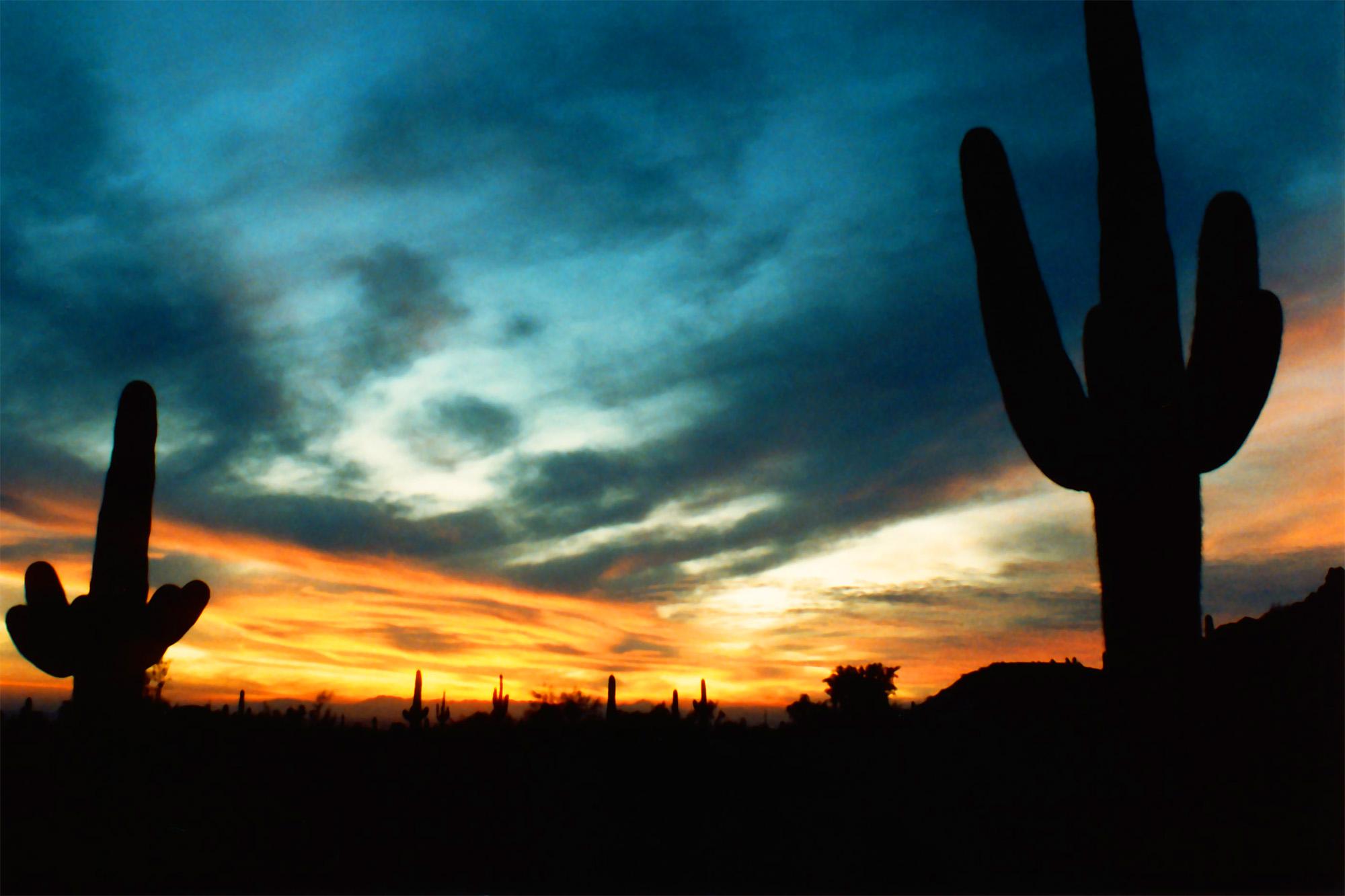 Arizona cactus. LP Photo Video. Omaha Photography.